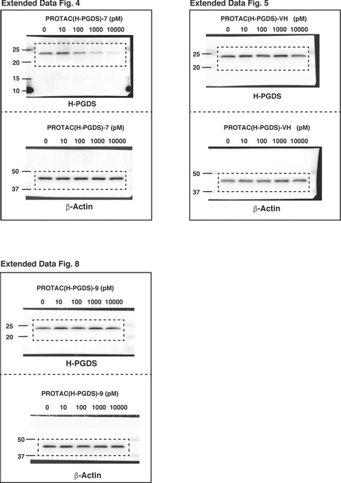 Thumbnail image of Source Data Extended Data Fig.4,5,8.pdf