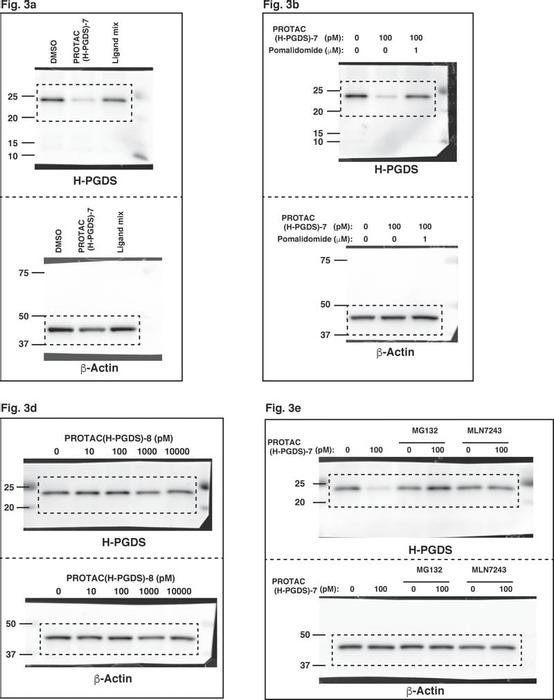 Thumbnail image of Source Data Fig.3a,b,d,e.pdf