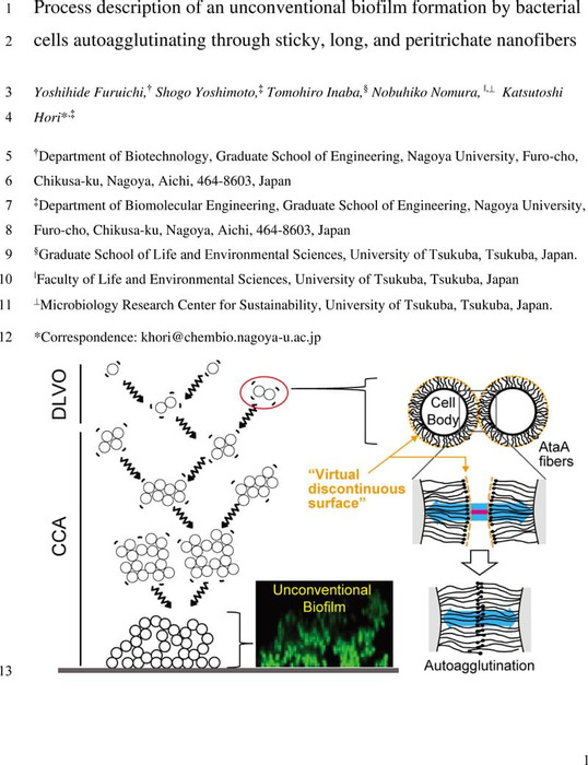 Thumbnail image of Process description of an unconventional biofilm formation by bacterial cells autoagglutinating through sticky, long, and peritrichate nanofibers.pdf