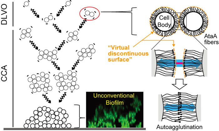 Thumbnail image of Graphical Abstract.tiff