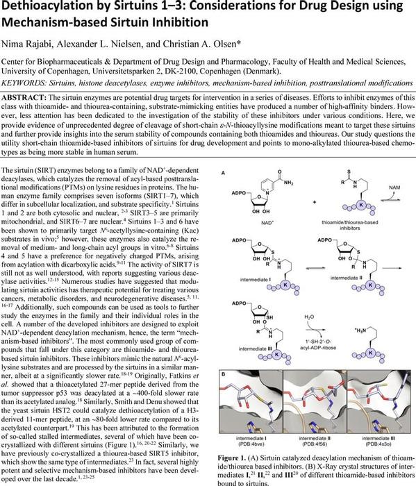 Thumbnail image of SIRT1i_Manuscript-R1-ChemRxiv.pdf