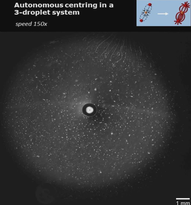 Thumbnail image of Movie 6 - Autonomous centring in a 3-droplet system.mp4