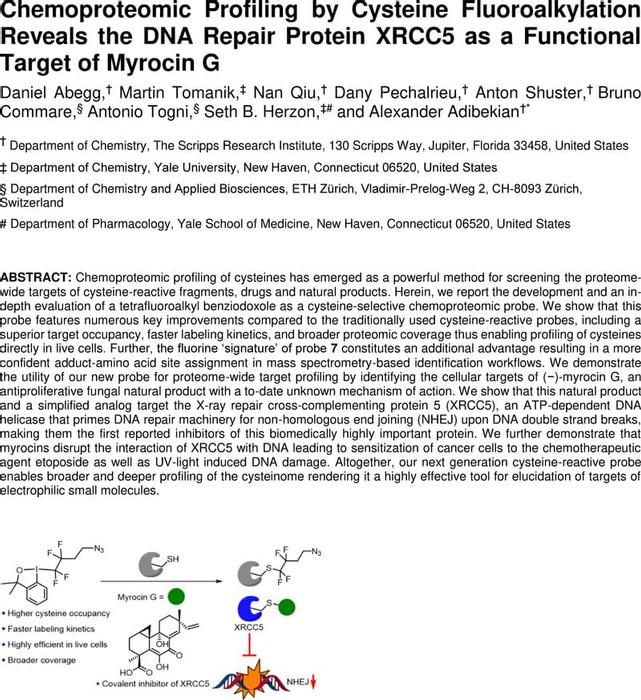 Thumbnail image of Manuscript_XRCC5.pdf
